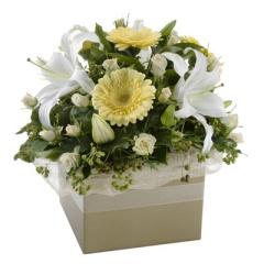 White Sympathy Box